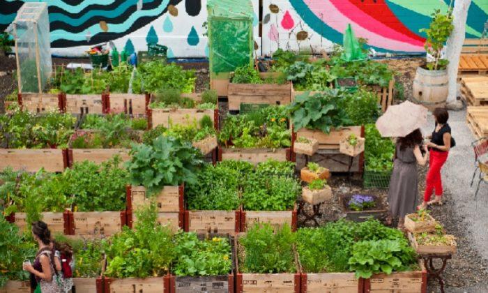 Menjalankan Bisnis Pertanian Bagi Kaum Milenial