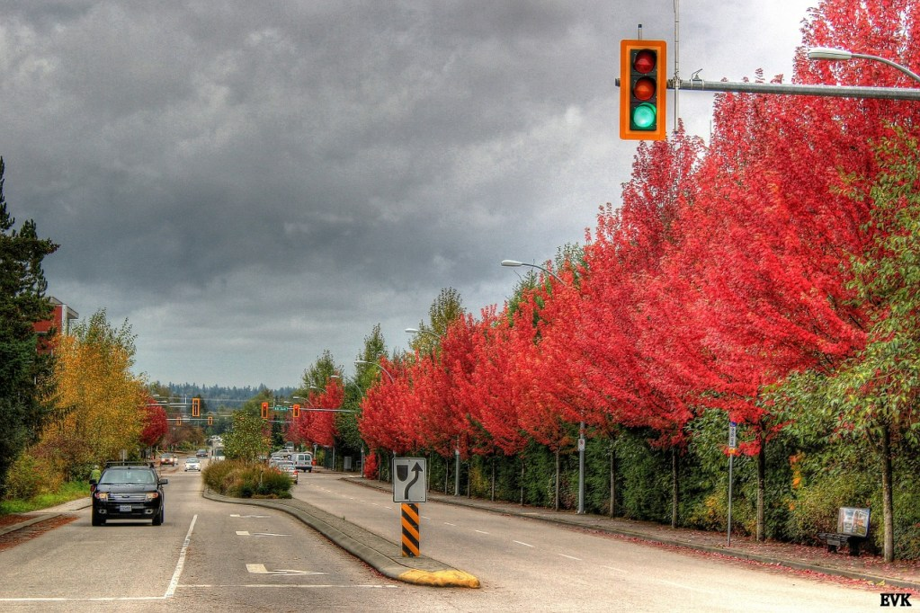 city of langley experience