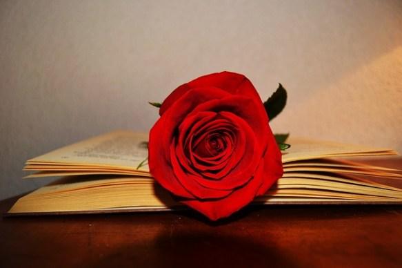 livre rose amour valentin