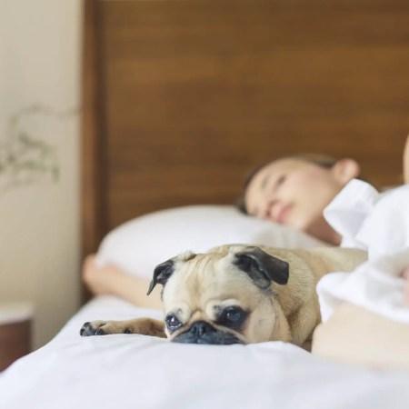 Dormire bene, attività e esercizi. (Italian Level B1). 12