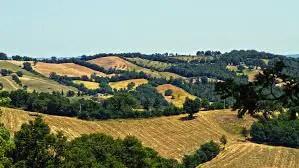 il Morellino