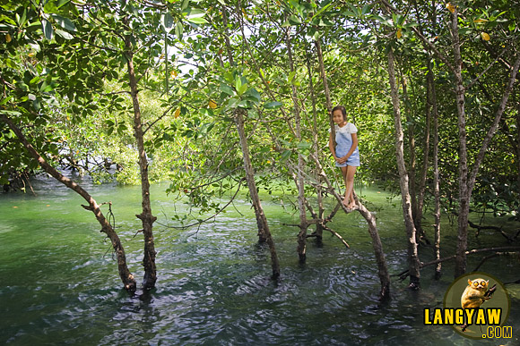 Mangroves are a common sight in Cebu especially at the northern part. In Asturias, these girl contented herself with staying on one of the trees while her playmates were enjoying the water.