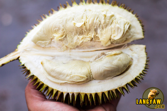 Jolo durian