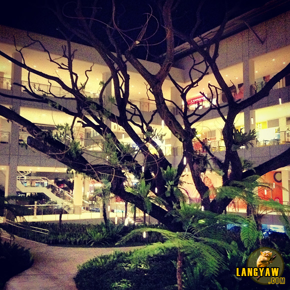 Centrio Mall in CDO with an old tree incorporated within