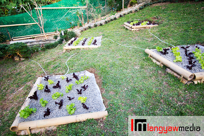 Aquaponics plot setup wherein water from a fishpond is routed to the different plots