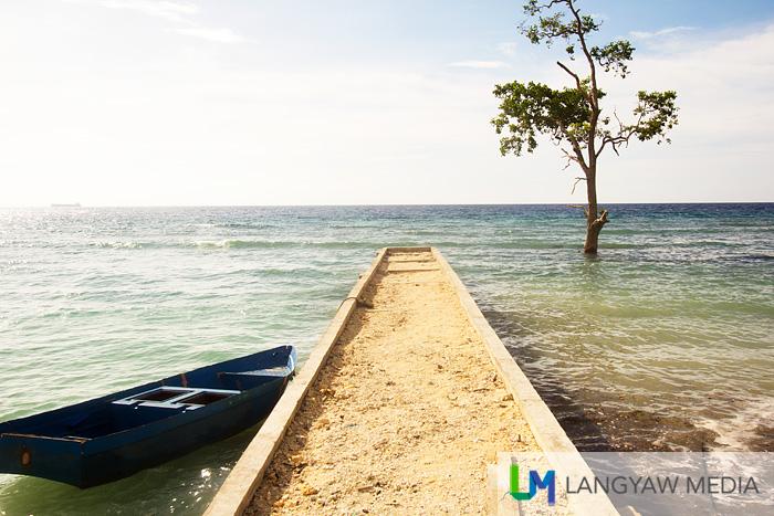 Small wharf, mangrove tree