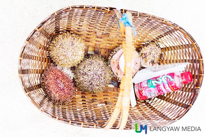 Sea urchin in a basket with a plastic bottle of vinegar