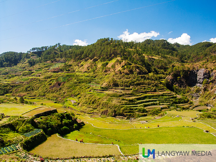 The rice terraces of Barangay Madongo is picturesque and can be seen along the road to Fidelisan