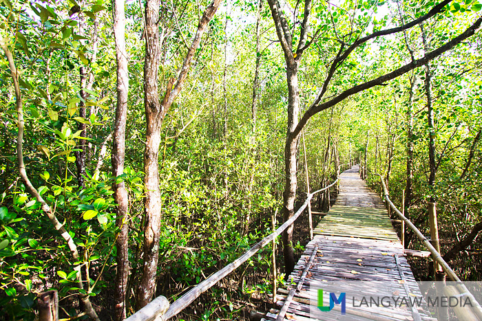 The Bakhawan Ecop Park is lush and beckons