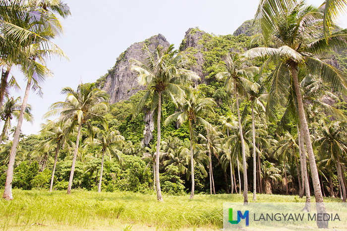 Sheer cliffs and coconut trees