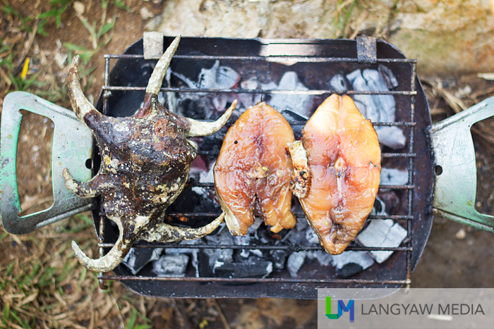 A large spider conch we found near the shed while we were swimming is grilled together with slices of fish. Lunch!