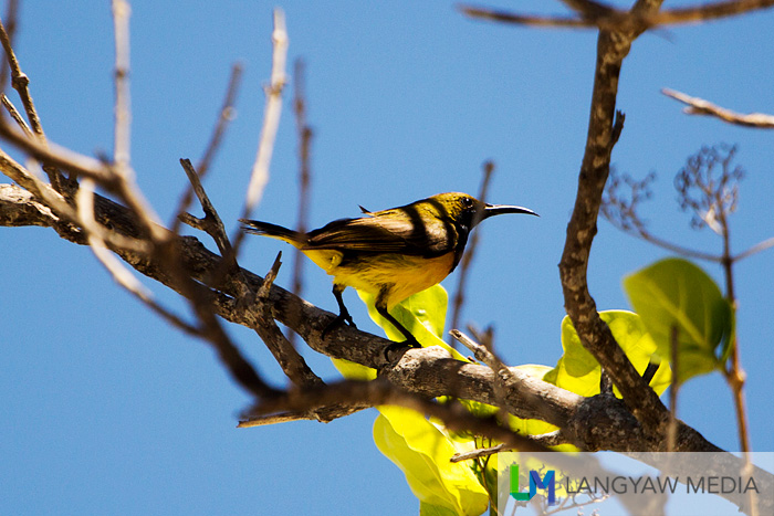 A female sunbird is just one of many species of birds that can be seen in the island