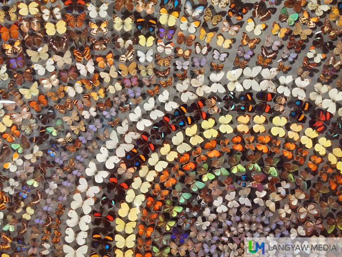 Detail of a huge mural made from a mosaic of different butterfly species