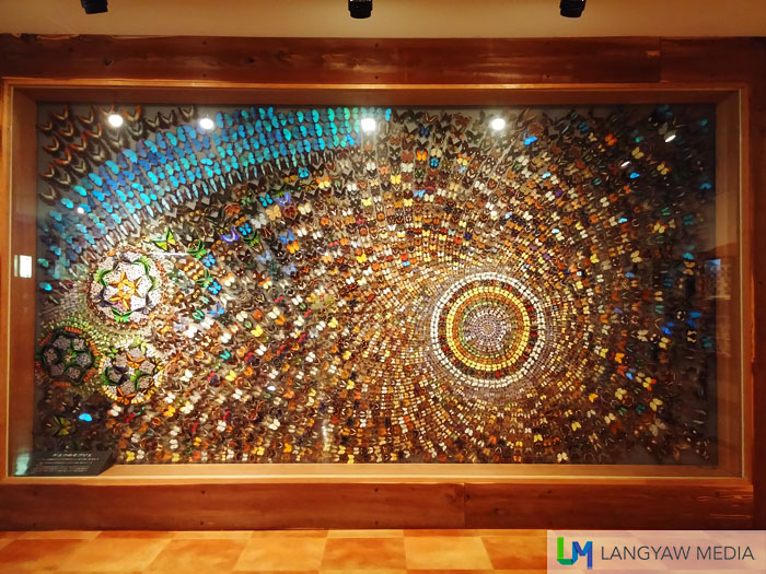 A huge mural of different butterflies from around the world