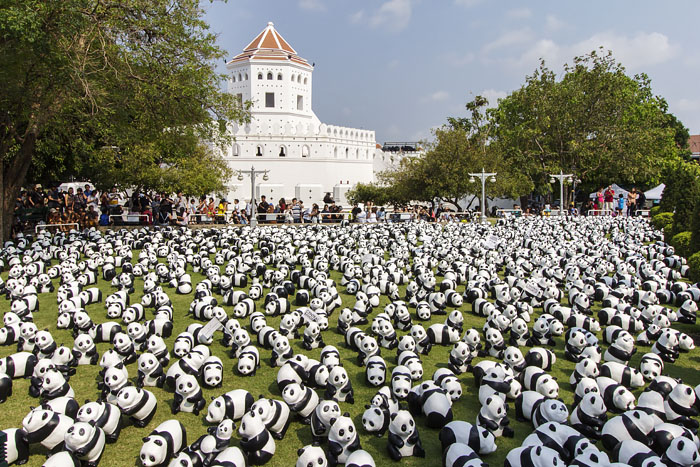 1600+ pandas cover one of the grass grounds of Santichaiprakarn Park with Fort Phra Sumen. This was part of the art installation of Paolo Grangreon which happened in different parts of Bangkok.