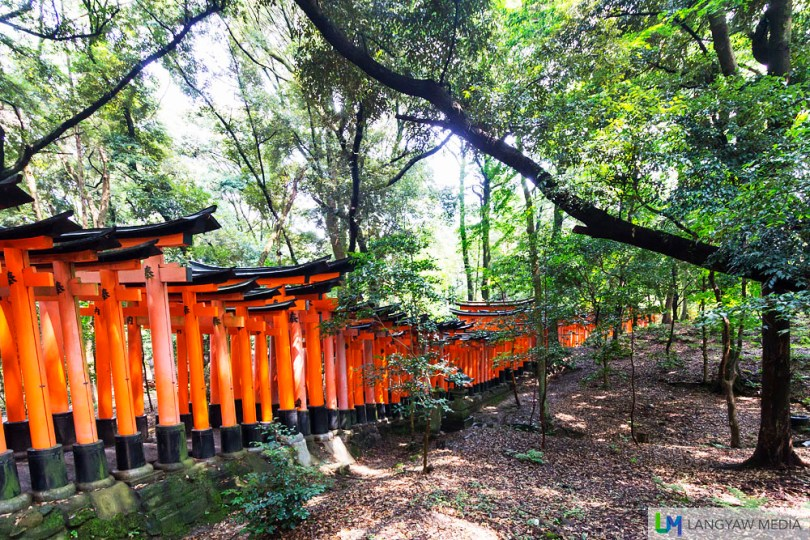 Torii gates leading to the two upper and important shrines midway and at the summit.