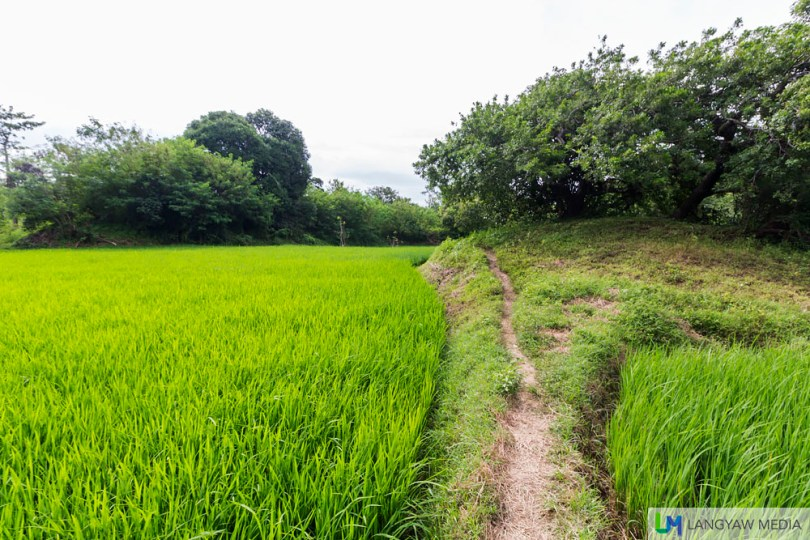 What a greenery! The ricefield just along the path to the top of the waterfall