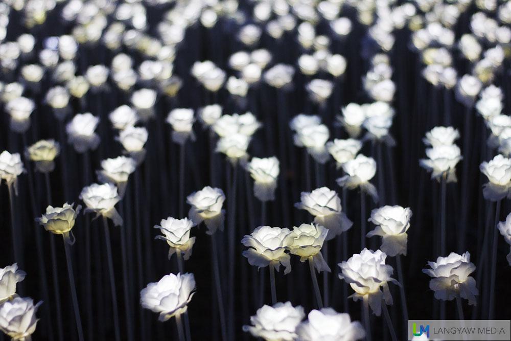 10000 roses cafe