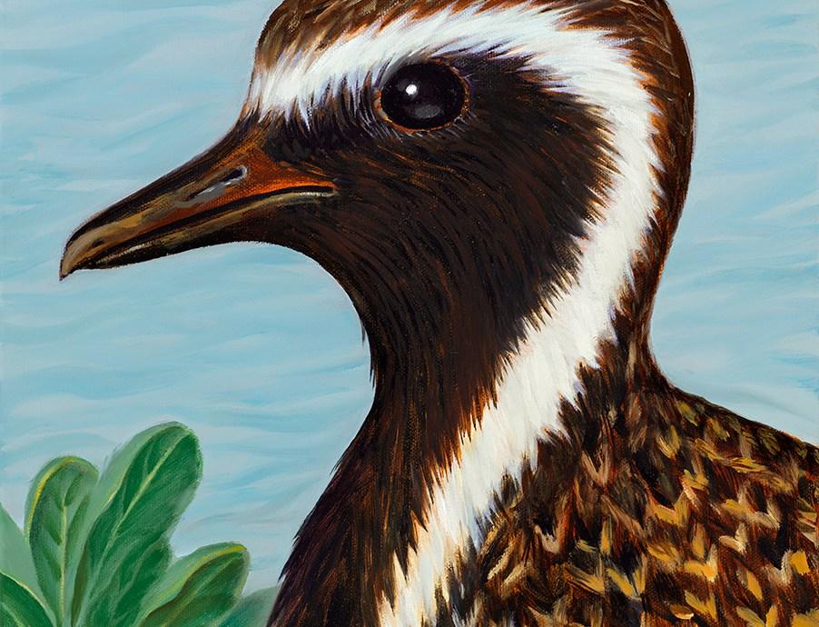 Kolea Bird