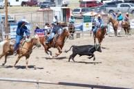 Team calf roping