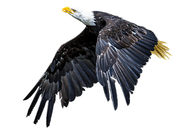 Read more about the article Which bird sees the sun face to face General knowledge about eagle
