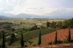 Tea plantation, Kyaing Ton