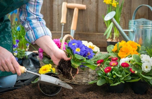 Hobby de jardinagem