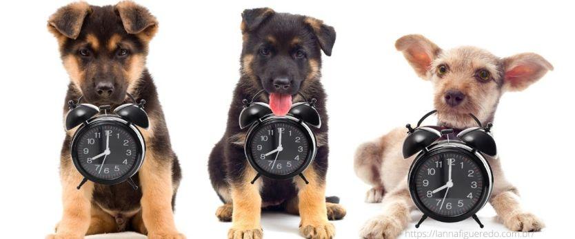 quanto tempo vive um cachorro