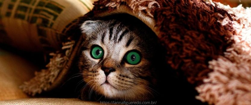 quanto tempo vive um gato