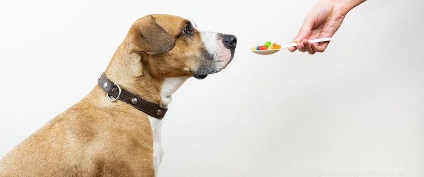Vitamina para cachorro