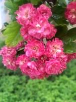 Mooi roze is niet lelijk