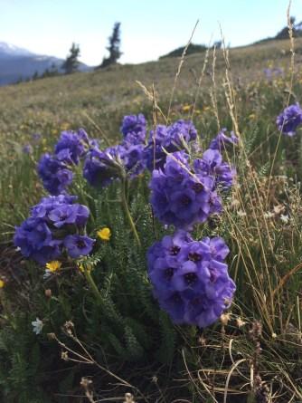 Mt. Flora, July 2016