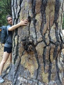 Fellow tree-hugger
