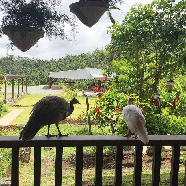 Hacienda La Mocha en Puerto Rico: un viaje en el tiempo