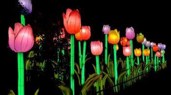 "Jungle Island cobra protagonismo con ""Luminosa, Festival of Ligths"""