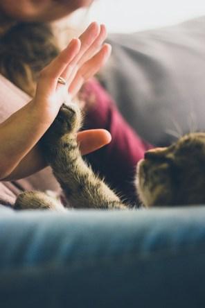¿Los gatos pueden conectarse con las personas como los perros?