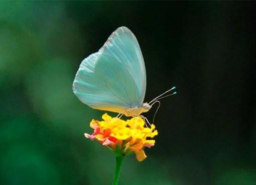 """""""Mariposas, Mariposas, debajo del cielo, encima del mundo"""""""