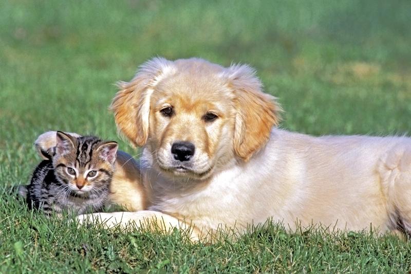 Un perrito y gattito acostados en un césped.