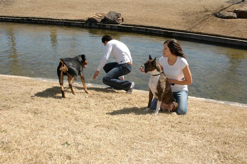 Foto de una pareja con sus dos perros en un parque.