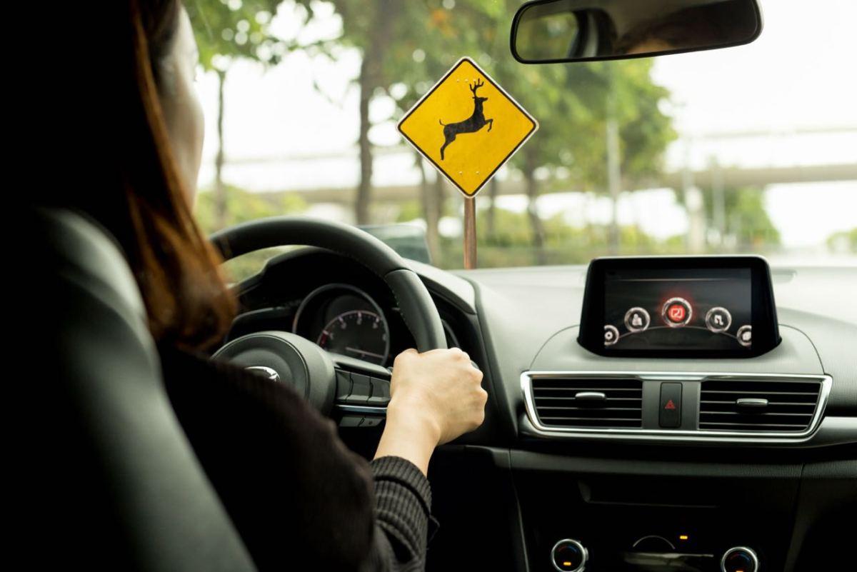 Advierten sobre mayor presencia de venados en las carreteras del estado