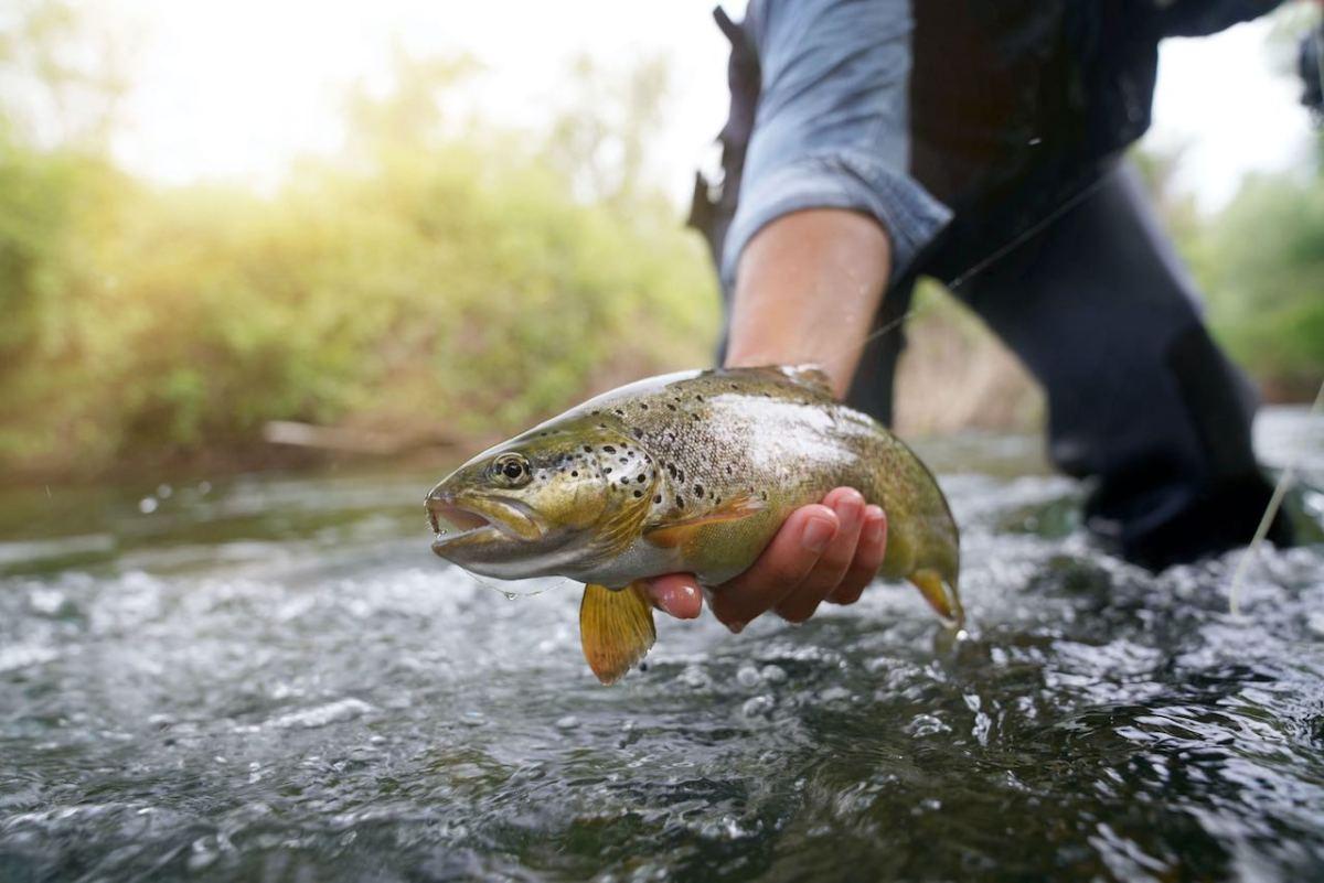 Anuncian cambios en las licencias de cacería y pesca