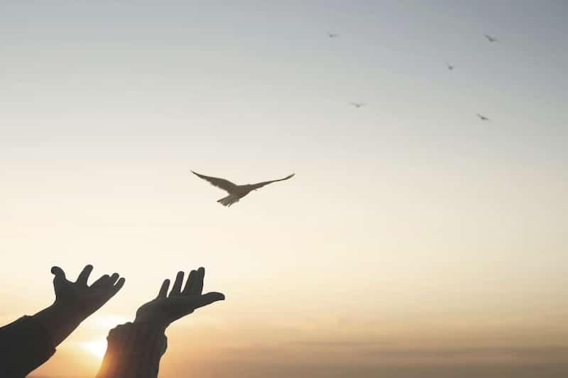 ¿Cuándo se conmemora el día internacional de la paz?