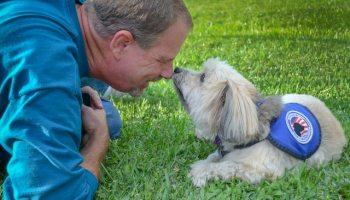 Perros pueden olfatear el COVID-19, revela un estudio