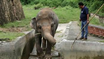 El día nacional de agradecimiento al elefante
