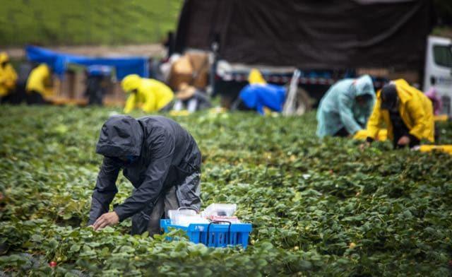 roy-cooper-detiene-la-orden-ejecutiva-que-protege-a-los-trabajadores-agricolas