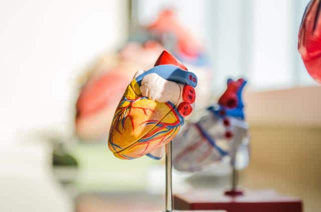 descubren-los-nutrientes-que-usan-los-corazones-sanos-y-los-que-tienen-problemas