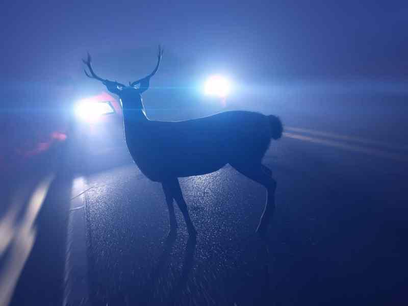 los-animales-atropellados-en-carolina-del-norte-alcanzan-un-nuevo-pico-desde-2014