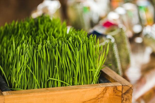 Wheatgrass: ¿qué es y cómo puede mejorar tu salud?