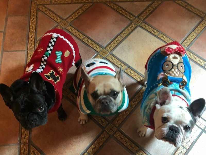 perros secuestrados lady gaga