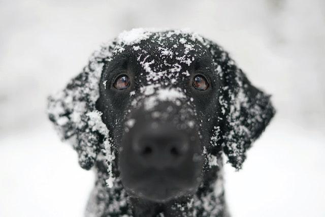 Advierten mantener a los animales seguros durante las temperaturas de hielo